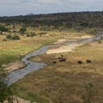 Elefanten am Tarangirefluß, der in der Trockenzeit nur wenig Wasser führt, aber trotzdem viele Tiere anlockt.