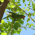 In den zahlreichen Parks der Stadt findet man viele bunte Vögel.