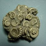 ammonite cluster