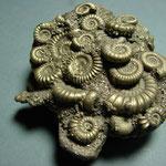 pyrite fossils dorset