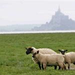 Mont Saint-Michel et prés salés © Gérard Houdou
