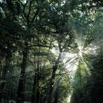 Lever de soleil en forêt © Gérard Houdou