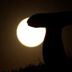 Cèpe et lune © Gérard Houdou