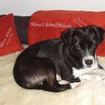 Hundedecke und Kuschelkissen für Mona nach Wunsch bestickt