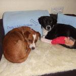 Hundedecke und Kuschelkissen für Dusty nach Wunsch bestickt