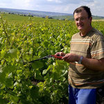 Rognage en été dans notre vigne de Cuis, près d'Epernay