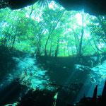 Blick von der Cenote an die Oberfläche...