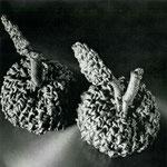 Les Fruits de Mal, 1976