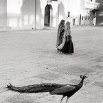 Jaipur, 1956