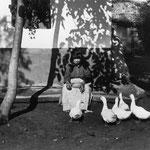 Nourrir les canards en fin de journée - Tisza