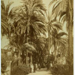 Luxor - Group of men on street lined with palm trees