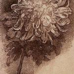 Piet Mondrian - Crisantemo - 1908/1910 - Carboncino su carta