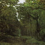Avenue of Chestnut Trees