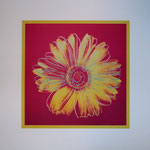 Daisy Fushia & Yellow, 1982