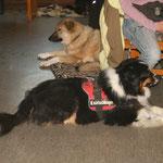 ...noch völlig entspannte Hunde...