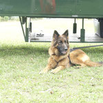 Ayana - unser Wachhund ;-)