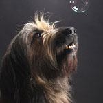 Nanuk und die Seifenblasen