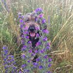 Nanuk, der Blumenprinz ;-)