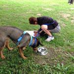 Während die Hunde den Napf leerschlabbert mussten die Menschen Hunderassen notieren, die ihnen einfallen.