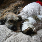 Kimba und Nanuk auf dem Hundebett