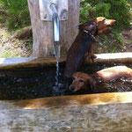 Die Dackel hatten sogar eine eigene Badewanne