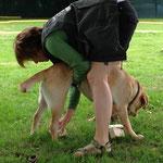 Auf Stelzen: Die Menschen mussten ihre Hund mit allen vier Pfoten gleichzeitig auf die Holzklötze stellen