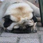 Carlos in seiner Lieblingsschlafstellung