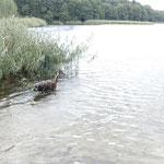 baden am See