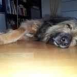 Nanuk so müde