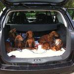 Wieviele Dackel passen in den Kofferraum???