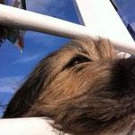 die Nase im Wind - auf einer Schifffahrt