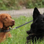 Heidi und Frieda warten gespannt aber sehr geduldig auf ihren Einsatz.