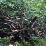 Wanderung auf dem Luchspfad am Plättig