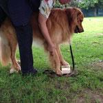 Hund auf Stelzen