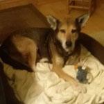 Nach 14 Jahren im Shelter hat es Good Wolf nun geschafft. Er ist nun glücklich adoptiert in Deutschland. Wir hoffen, du hast noch einige schöne Jahre vor dir!
