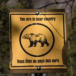 Bear Country!