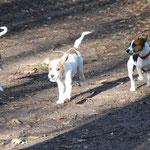 Bo-Joe, Bixie und Baffina