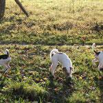 Baffi, Bixie und Binou