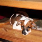 Binou hat sich ein ruhiges Plätzchen unterm Tisch gesucht...