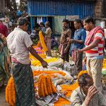 Les terres qui s'étendent autour de Calcutta sont particulièrement propices à la culture des fleurs