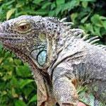 La ferme aux reptiles