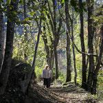 Ariège-Pyrénées, Goulier, balade en forêt