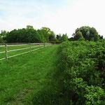 die Galoppbahn, links die Weiden
