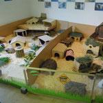 Ein richtiges Schweinchenzimmer - hier leben mehr als 10 Meerschweinchen in zwei Gruppen...