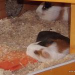 Tiffy liegt mit ihrem Köpfchen auf dem Kühlakku