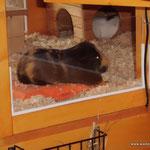 Merlin auf einem Kühlakku mit Geschirrtuch