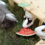Melone zur Erfrischung