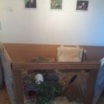 Hier leben 2 Kaninchen IM Haus...