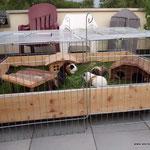 """Hier kann """"schwein"""" sich wohlfühlen :-). Zum Schutz vor Greifvögeln ist ein Gitter drumherum."""
