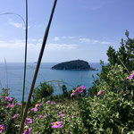 Isola Palmaria, Isola del Tino